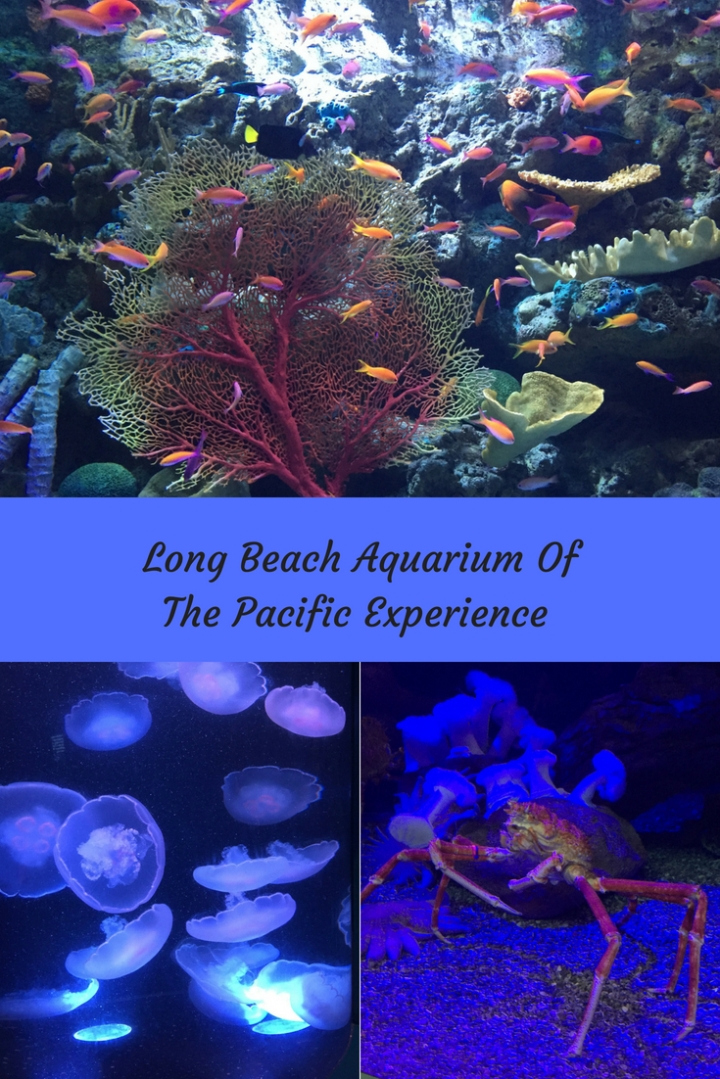 Long Beach Aquarium Of The Pacific Experience